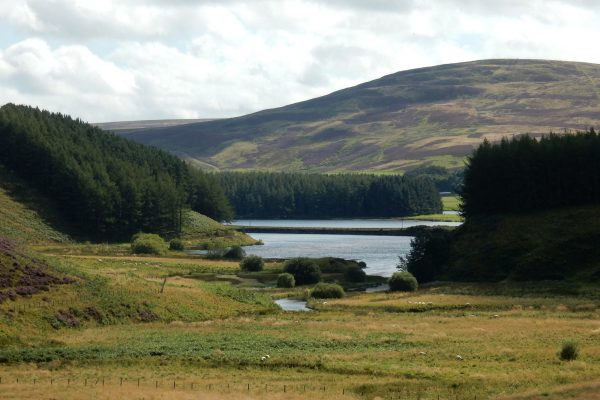 Looking towards the reservoir with pine trees on either side and heather covered hill in the distance.