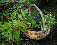A wicker basket of foraged herbs and plants.