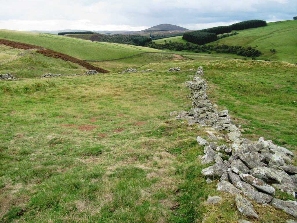 low, ruinous drystone walls in rough grazing at Wrunklaw
